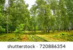 birch grove with a road and... | Shutterstock . vector #720886354