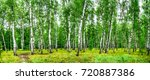 birch grove with a road on... | Shutterstock . vector #720887386