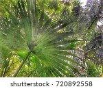 scenery of public natural... | Shutterstock . vector #720892558