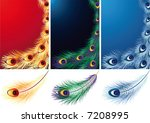 Vector Illustration   Peacock ...