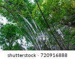 top view bamboo  landscape... | Shutterstock . vector #720916888