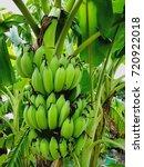 banana natural fruit in the... | Shutterstock . vector #720922018