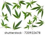cannabis leaf  marijuana... | Shutterstock . vector #720922678