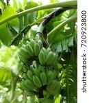 banana natural thai fruit in... | Shutterstock . vector #720923800