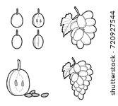grape vector illustration hand... | Shutterstock .eps vector #720927544