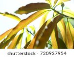 nature abstract background of... | Shutterstock . vector #720937954