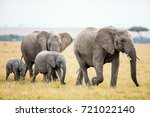 elephants in safari park in... | Shutterstock . vector #721022140