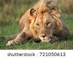 lion  masai mara | Shutterstock . vector #721050613