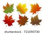 Vector Autumn Maple Leaves...