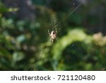 a spider sat in the center of... | Shutterstock . vector #721120480