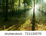 forest landscape | Shutterstock . vector #721120570