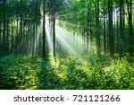 forest landscape | Shutterstock . vector #721121266