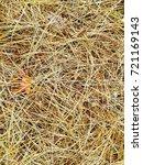 fallen golden pine needles on a ... | Shutterstock . vector #721169143