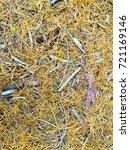 fallen golden pine needles on a ... | Shutterstock . vector #721169146