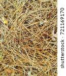 fallen golden pine needles on a ... | Shutterstock . vector #721169170