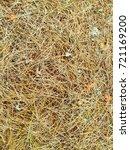 fallen golden pine needles on a ... | Shutterstock . vector #721169200