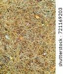 fallen golden pine needles on a ... | Shutterstock . vector #721169203