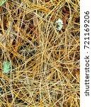 fallen golden pine needles on a ... | Shutterstock . vector #721169206