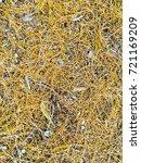 fallen golden pine needles on a ... | Shutterstock . vector #721169209