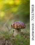 eat delicious sponge boletus... | Shutterstock . vector #721178818