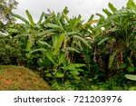 nature of the topes de... | Shutterstock . vector #721203976