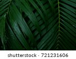 Small photo of Dew and Green leaves background. Green leaves color tone dark after raining in the morning. Tropical Plant , environment, photo concept nature and plant.
