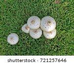 The Mushroom Heads