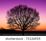 Alone Tree at night - stock photo