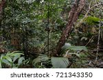 jungle  tropical rainforest  of ... | Shutterstock . vector #721343350