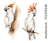 sky bird white macaw in a... | Shutterstock . vector #721355638