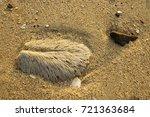 on the beach | Shutterstock . vector #721363684