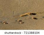 footprints in the sand | Shutterstock . vector #721388104
