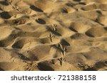 footprints in the sand | Shutterstock . vector #721388158