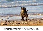 black staffordshire terrier... | Shutterstock . vector #721399048