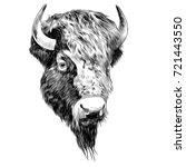 Bison Sketch Vector Graphics...