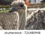 Sad Ostrich In Captivity In A...