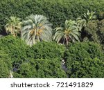 many palm trees  arecaceae  in...   Shutterstock . vector #721491829