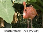 pictures flamingo of animals... | Shutterstock . vector #721497934