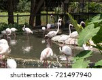 pictures flamingo of animals... | Shutterstock . vector #721497940