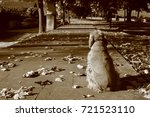 abandoned dog loneliness... | Shutterstock . vector #721523110
