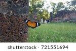 beautiful butterfly in... | Shutterstock . vector #721551694