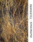 Small photo of root tangle or root System with algae in a garden Pond, macro roots