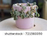 potted plants with dead plants | Shutterstock . vector #721583350