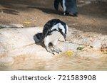 the little penguins  eudyptula... | Shutterstock . vector #721583908