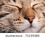 Stock photo sleeping cat face closeup focusing in the foreground 72159385