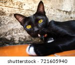 black cat with yellow eyes on... | Shutterstock . vector #721605940