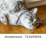the nice gray cat lies on a... | Shutterstock . vector #721693054