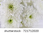 Chrysanthemum White Background