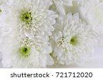 Chrysanthemum White Background