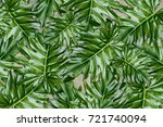 beautiful tropical leaves ... | Shutterstock . vector #721740094